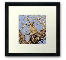 Wild Owl Framed Print