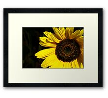 The Sunflower and the Wasp Framed Print