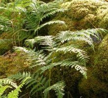 Ferns And Moss Sticker