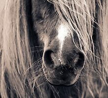 Portrait Of A Pony by ArtofOrdinary