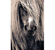 Portrait Of A Pony Photographic Print