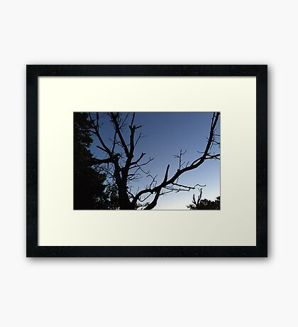 Silhouette of a Tree Framed Print