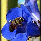 Bee Photogenic  by Kimberly Chadwick