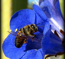 Bee Photogenic  by Kimberly Chadwick