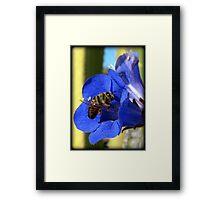 Bee Photogenic  Framed Print