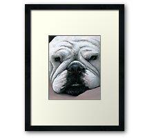 Dog 118 English Bulldog Framed Print