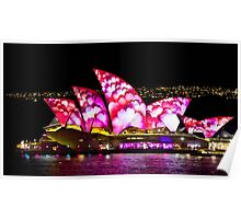 Pink Sails At Night - Sydney Vivid Festival - Australia Poster