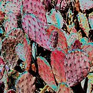 Ruby Red Prickly Pear Cactus by LaRoach
