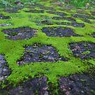 Moss moment by Karen01