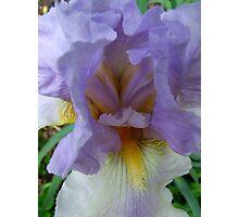 Heart of the Iris Photographic Print