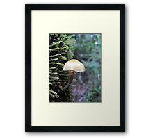 An elegant tree hugger Framed Print