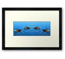 Tranquil Ducks Framed Print