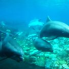 Under SeaWorld II by dolphinandcow