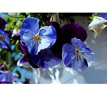 Spring Charm Photographic Print