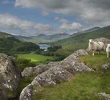 Y Pincin Snowdonia by eddiej