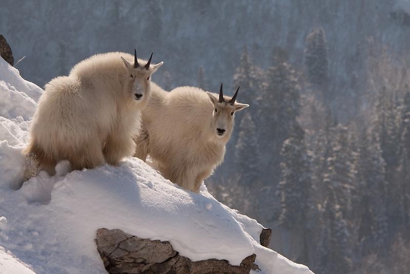 Winter Wonderland by Kent Keller