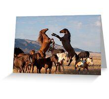Mustang Clash Greeting Card