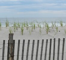 Dunes by Marijane  Moyer