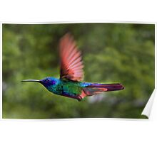 Flight Of The Hummingbird Painting Poster
