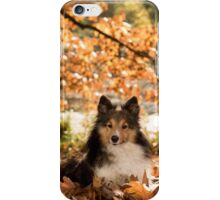 Sheltie Dog iPhone Case/Skin