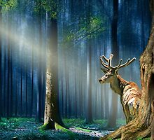 The deer in the mystical forest  by Monika Juengling