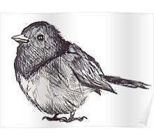 Pen Drawn Finch Sketch Poster