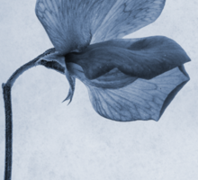 Sweet Pea Cyanotype Sticker