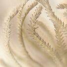 Touching Grass Hearts 2 © Vicki Ferrari by Vicki Ferrari