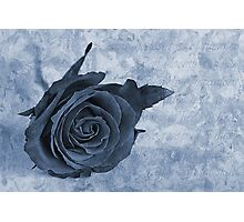 The last rose of summer cyanotype Photographic Print