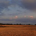 Corn fields at dusk by vigor