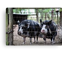 Just Us Pigs Canvas Print