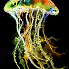 Neon Jellyfish by Linda Callaghan