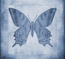 Butterfly Textures Cyanotype by John Edwards