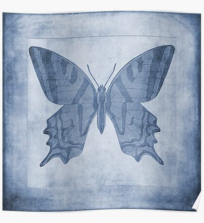 Butterfly Textures Cyanotype Poster
