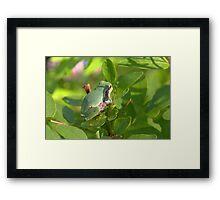 Gray Treefrog Framed Print