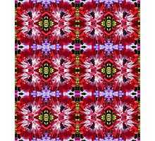 Red Anemone Pattern Photographic Print
