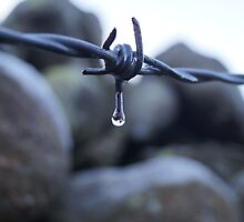Frozen Barbed Wire by jamins