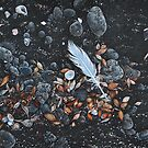 Beach floor, Flinders Vic by Elena Kolotusha