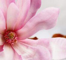 Still Magnolia Sticker