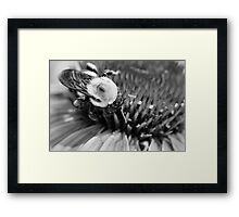 Black and White Bumble Framed Print