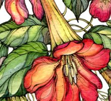 Red Trumpet Vine flowers. Sticker