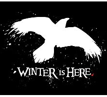 Winter is Here - Large Raven on Black Photographic Print