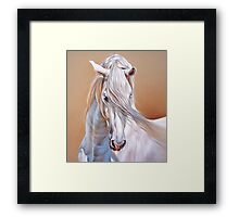 """Andalusian stallion"" - close-up Framed Print"