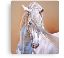 """Andalusian stallion"" - close-up Canvas Print"