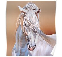 """Andalusian stallion"" - close-up Poster"