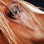 """""""Arabian"""" by Elena Kolotusha"""
