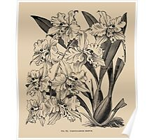 Winter Orchid Poster