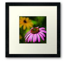 Purple Coneflower in a Summer Garden  Framed Print