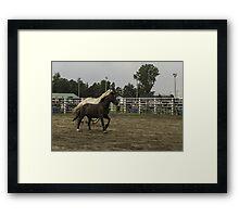 Horses in a trot Framed Print