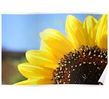 A Sunflower Close Up Poster